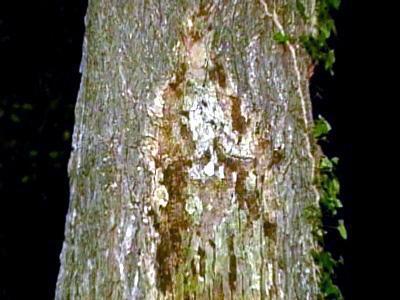 Mary_tree