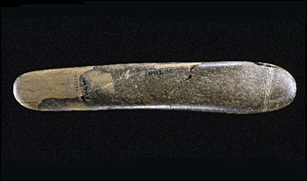 Prehistoricphallus_1